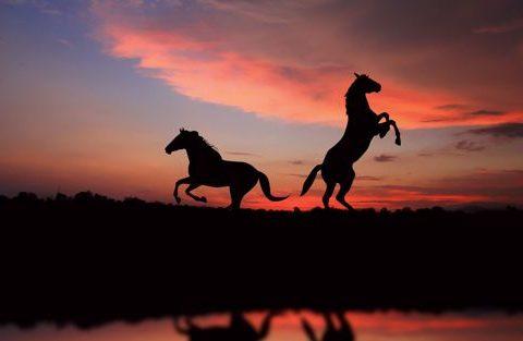 soñar con caballos 1