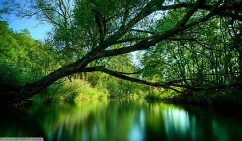Qué significa soñar con la naturaleza